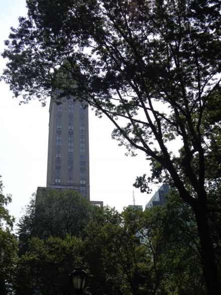 In Central Park because of tree crowns are seen skyscrapers